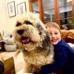 Prevention of Cruelty to Animals Queensland